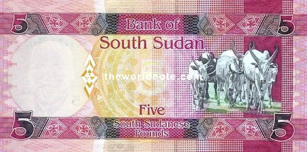 5 South Sudanese pound the back is Aliab Dinka cattle